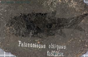 taxa hvidovre czech dating